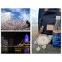 [2016東京賞櫻]轉角遇見的夢幻櫻花&夜景 - 橫濱.世界之窗&紅磚倉庫(3COINS好好逛)