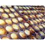 美食。甜點│ 台北中山區 中山捷運站 來自日本北海道 BAKE CHEESE TART 起司塔 新光三越南西三館 ❤跟著Livia享受人生❤
