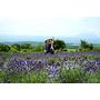 日本九州大分縣▋くじゅう花公園 久住花公園~多種珍奇花卉美不勝收,不用到北海道就可以看紫色浪漫薰衣草