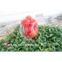 《簡易懶人食譜》甘草鹽粉 梅粉如何使用??沾蕃茄、芭樂水果。簡易版梅漬番茄 酸甜開胃︱ (附影片)