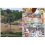 ((私房景點))新竹||關西六福莊生態渡假旅館之與長頸鹿一起住day1~暢遊六福村看盡放養式動物的自然生態!!
