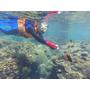 豆腐岬▋宜蘭南方澳~得天獨厚的美麗珊瑚礁群,輕鬆浮潛就看的到,就連在地人未必得知的生態秘境