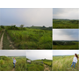 【台南景點】新化木架山草原,聽著風聲.看著綠油油的大草原,與大自然來一場深度對話