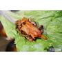 【羽諾食記】『肉倉韓式烤肉』❤無限量燒烤吃到飽 肉肉小菜吃到爽❤台北捷運西門韓式料理