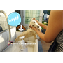 《寵物洗澡日記》幫狗洗澡洗香香之手忙腳亂篇x Boogie咘唧犬貓專用洗毛露︱影片