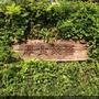 【發現竹北城市綠洲】厚食聚落,善良純樸的內在,簡單舒適的環境,難以抗拒的自然清新
