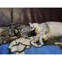 貓咪在沙發上暈倒了>u<