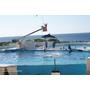 ♥日本|沖繩♥Day 2與Nemo&海豚的下午約會~沖繩海洋博紀念公園>>美國村(PART 2)