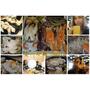 【嘉義東區】春川炒雞Omaya|ㄧ隻雞貝殼蒸 | 韓式料理