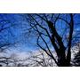 【日本,東北,青森縣 】聽說櫻花開時很美...,日本東北追櫻行 ~ 弘前城散策(和服體驗)、奧膳懷石翠明莊。