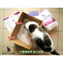 catfend 卡芬魔幻貓砂 除臭貓砂推薦開箱 可健檢的貓砂 無味貓砂免挖超輕鬆~