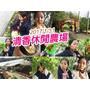 【台北旅遊】清香休閒農場 採番茄 採白菜  半日遊園區好玩