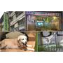 【寵物住宿】台北市文山區-毛毛窩寵物精品旅館,舒適安心的環境/24小時網路即時影像~讓毛爸媽能夠安心的將毛寶貝交給他們