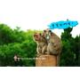 《新竹好玩景點》令新竹人驕傲的新竹市立動物園即將「請假」啦!。期待「新」動物園的模樣|(影片)預計2017/5月底開始封園整修