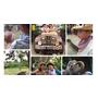 峇里島「BALI SAFARI&MARINE PARK」野生動物園❤️必訪親子景點大推薦(≧∇≦)/