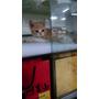 『貓奴日記』♫ 8/1-8/4與貓瘟貓相遇。。 。