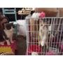 『貓奴日記』♫ 8/10-8/13對抗貓瘟。。 。