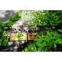 【亞洲,泰國】曼谷咖啡館,泰文創;Naiipa Art Complex的森林風咖啡館Li-bra-ry。