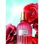 歐舒丹8月新品 :誌愛玫瑰限量香氛系列
