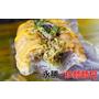 台中西屯【永勝炒麵麵包】逢甲夜市經典人氣排隊美食,來自日本的夢幻滋味