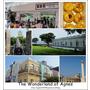 【2014澳門】澳門自由行Day4(下)澳門博物館、砲台、瑪嘉烈蛋塔、澳門漁人碼頭