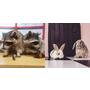 「不再是店貓店狗,竟然有浣熊!」盤點3家韓國寵物主題咖啡廳
