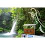 日本九州大分縣▋慈恩の潼、櫻潼! 炎炎夏日中享受清涼暢快森林浴的好地方