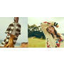[購物] 美國流行服飾品牌介紹
