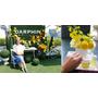 法國頂級芳療品牌DARPHIN朵法|岩蘭草舒壓芳香精露系列 新品上市記者會