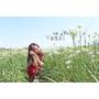 旅記 ▏【桃園大溪】韭菜花田-花季還沒過 抓住九月雪的尾巴 秘境