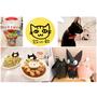 【毛寶貝】|板橋|貓欸Camulet,讓貓店員來好好療癒你吧~好吃又可愛的貓咪餐廳