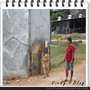 『泰國旅遊』tiger temple和老虎的初體驗 part.2
