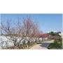 太平賞櫻秘境│麗園公園滿滿櫻花盛開中,櫻花步道、兒童遊樂設施、沙坑,季節限定!