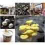 百菇莊.台中新社~採菇、吃菇、買菇的好地方、愛菇者的天堂
