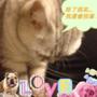 除了搞笑之外....胖胖貓還會幫忙按摩喔♥♥♥