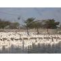 (360行向前衝) 吃牧草長大的模特鵝!? (週六21點請鎖定非凡電視台) 2013/2/23首播
