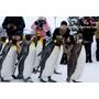【北海道旭川】大人氣!北極熊餵食秀 & 企鵝逛大街.旭山動物園